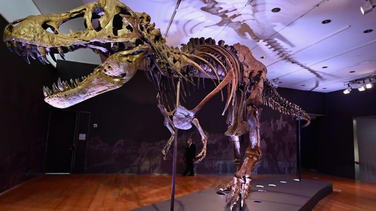 t-rex-fossil-32mil.jpg